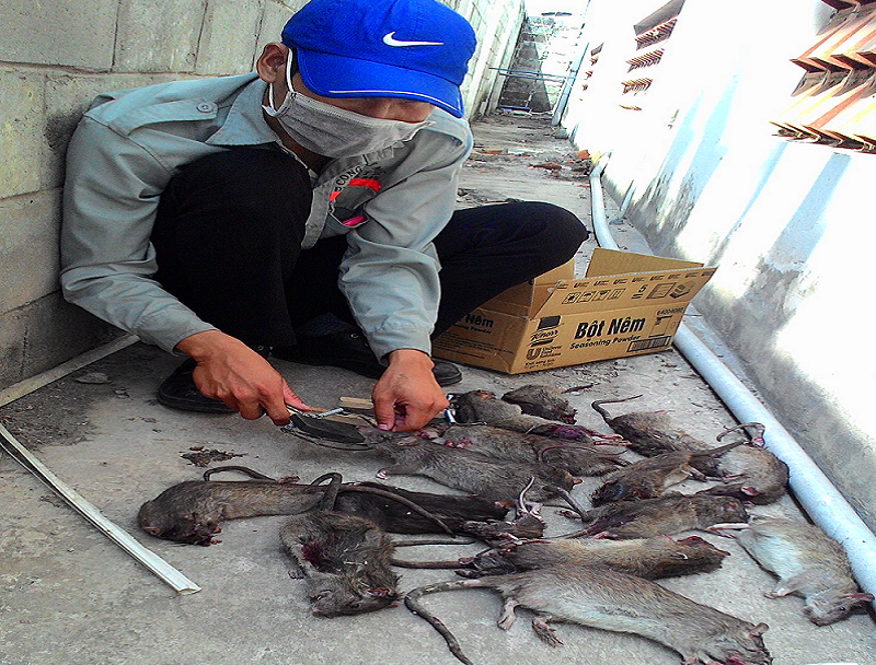 Đơn vị diệt chuột hiệu quả Sóc Trăng