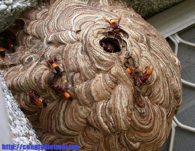 Công ty gỡ tổ ong chuyên nghiệp
