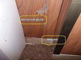 Mối gây hại trong nhà