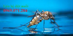 Phun diệt muỗi tận gốc Long An