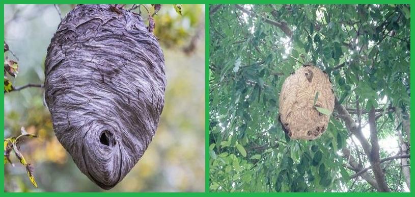 Đội chuyên nghiệp bắt ong tại Đồng Nai