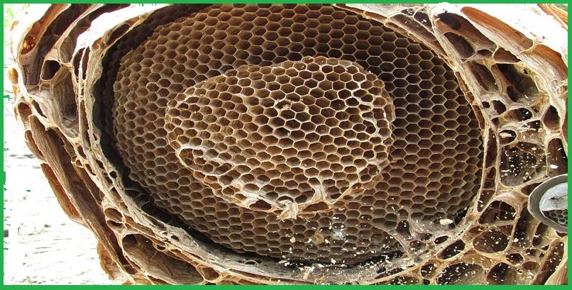 Công ty bắt ong tốt nhất tại TP.HCM