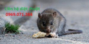 Dịch vụ diệt chuột quận 7