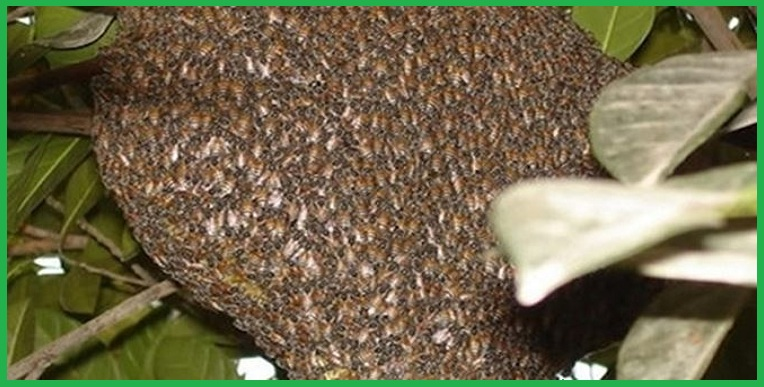 Trung tâm diệt ong hàng đầu Bình Dương