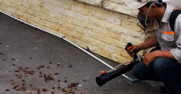 diệt côn trùng tại Hưng Yên