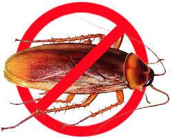 diệt côn trùng tại Hà Nội