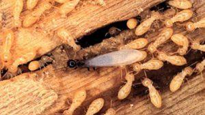 diệt côn trùng tại Yên Bái